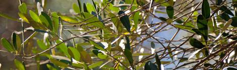 Virtù dell'olio di oliva