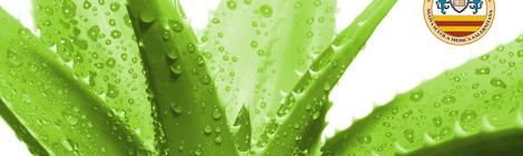 Le virtù dell'Aloe al Corso di Fitoterapia e Nutraceutica